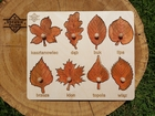 Liście jesienne (1)